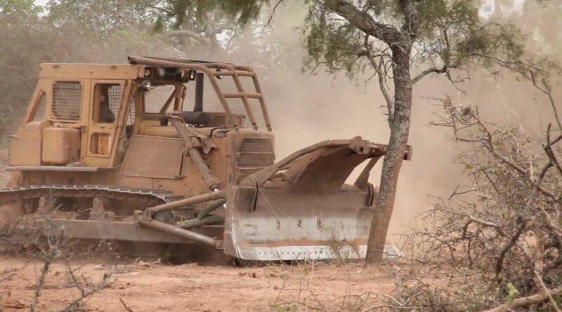 Buenas noticias: detienen el desmonte en el Chaco